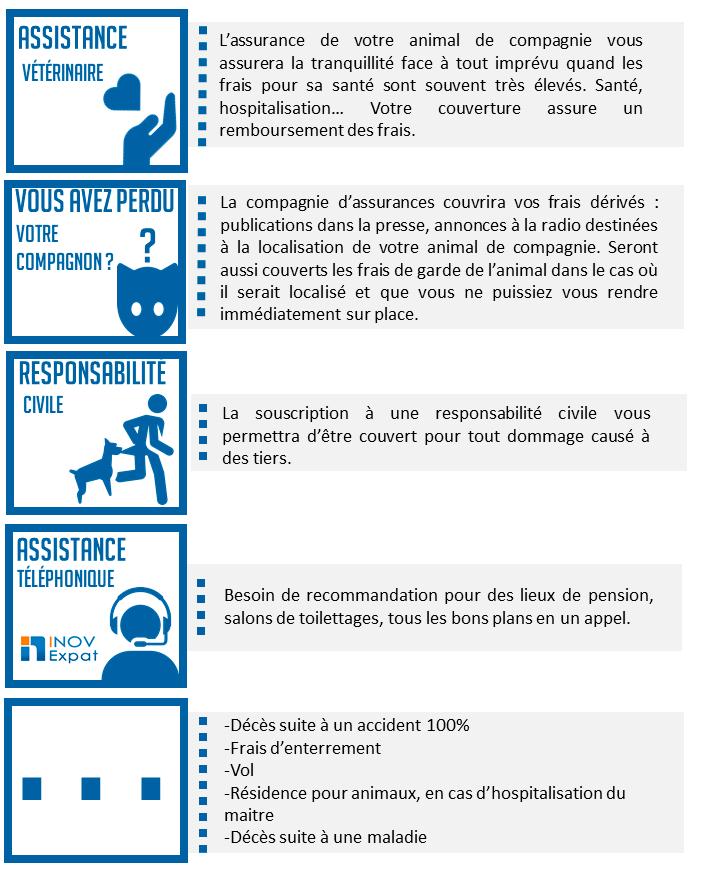 assurance animaux, chien, chat, assurance Espagne, chiens dangereux, responsabilité civile