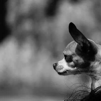 Assurance animaux : comment fonctionne l'assurance animaux en Espagne ?